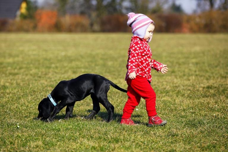 Child walking with black puppy