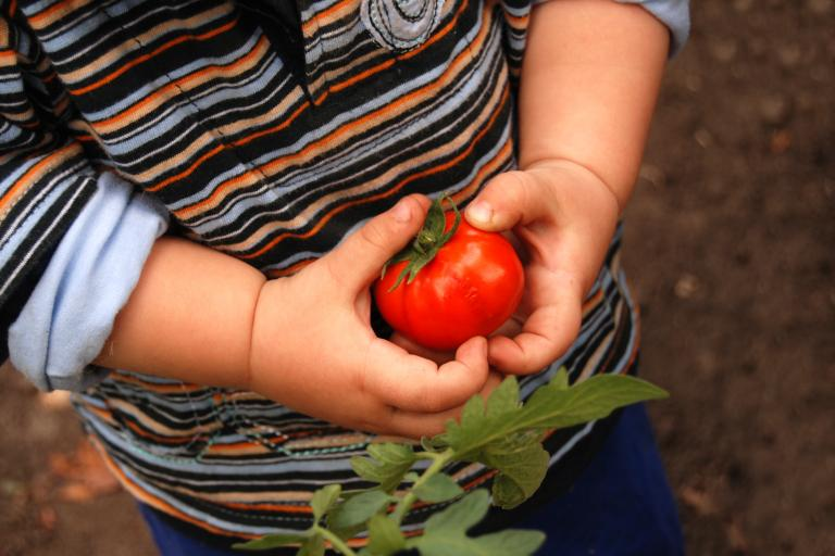 Toddler with Tomato